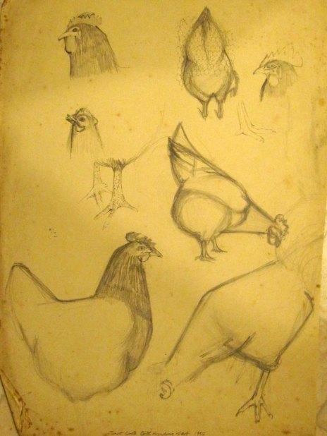 drawingchicken1
